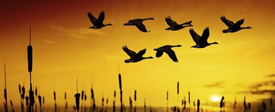 fall-birds