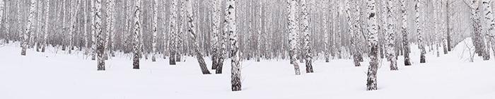 Winter Banner